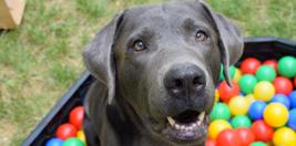 Evde Köpek Eğitmeni